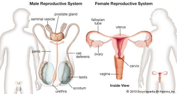 Biologi Reproduksi