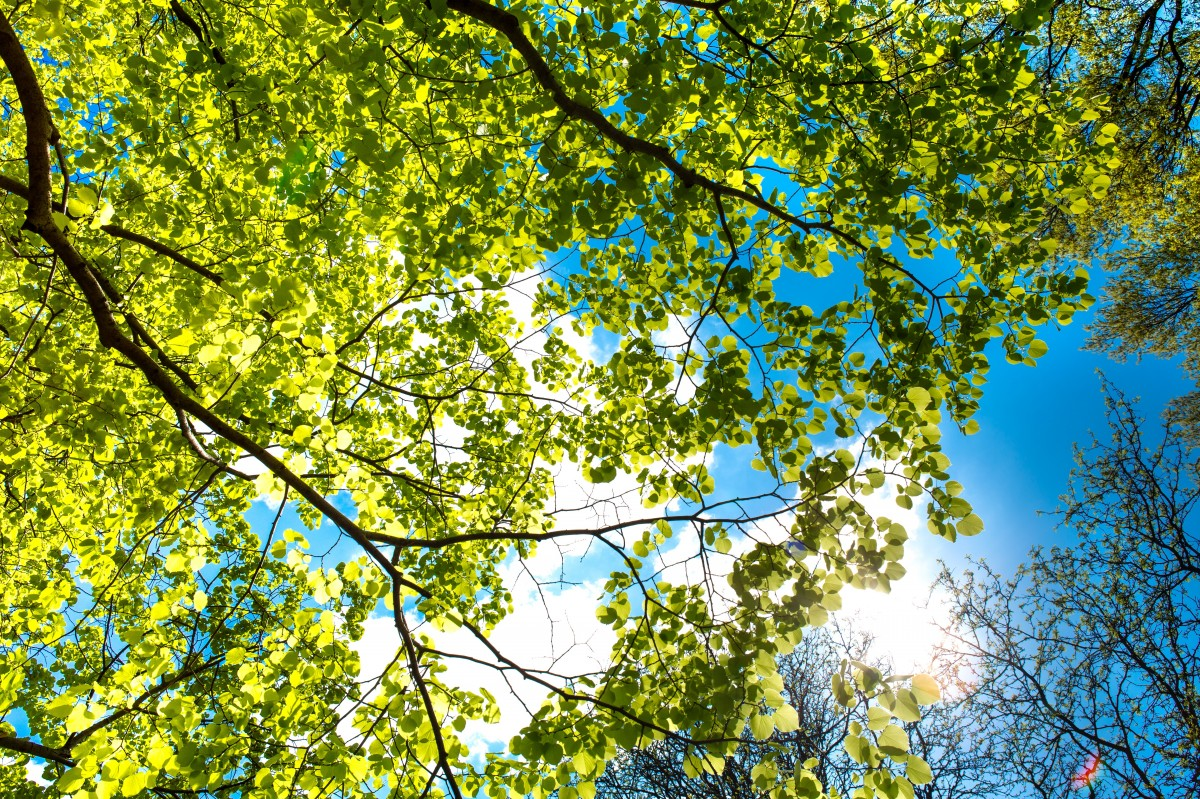 Ekologi Lingkungan 2019 A