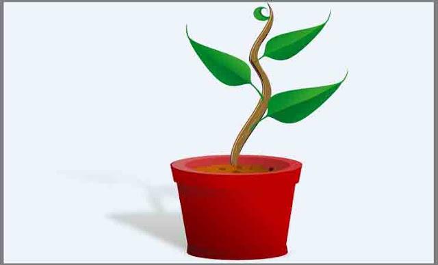taksonomi tumbuhan rendah