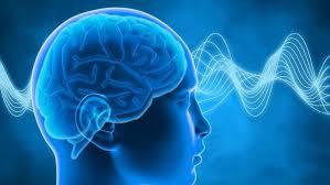 Neurologi dan Anatomi Otak 2020